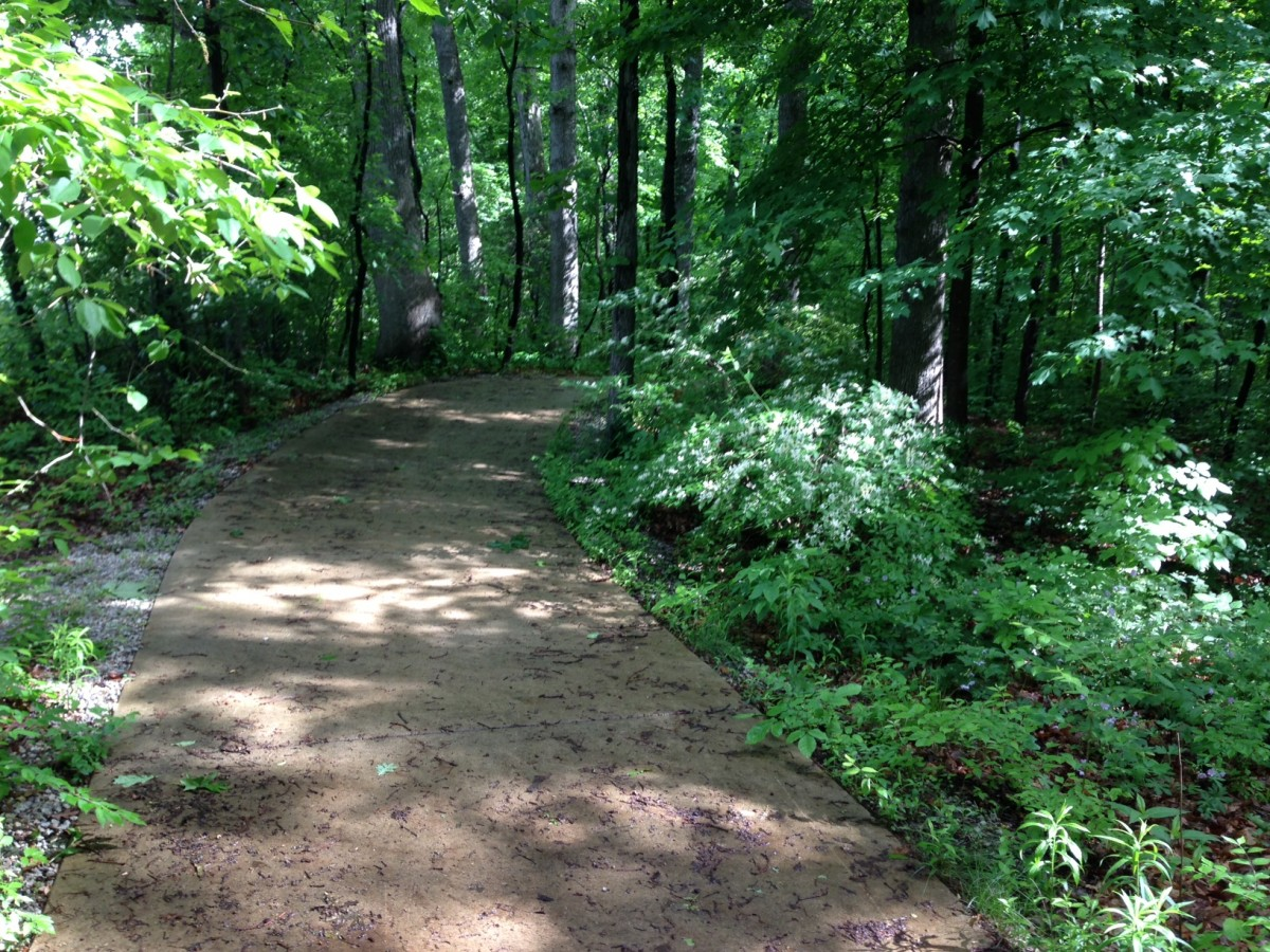 The forest in this section of the Spirit Trail creates the feeling of magic for runners, bikers and walkers.