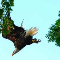 Eagle edit