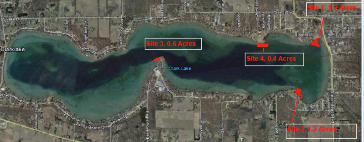 Invasive Weeds   Clark Lake Spirit Foundation