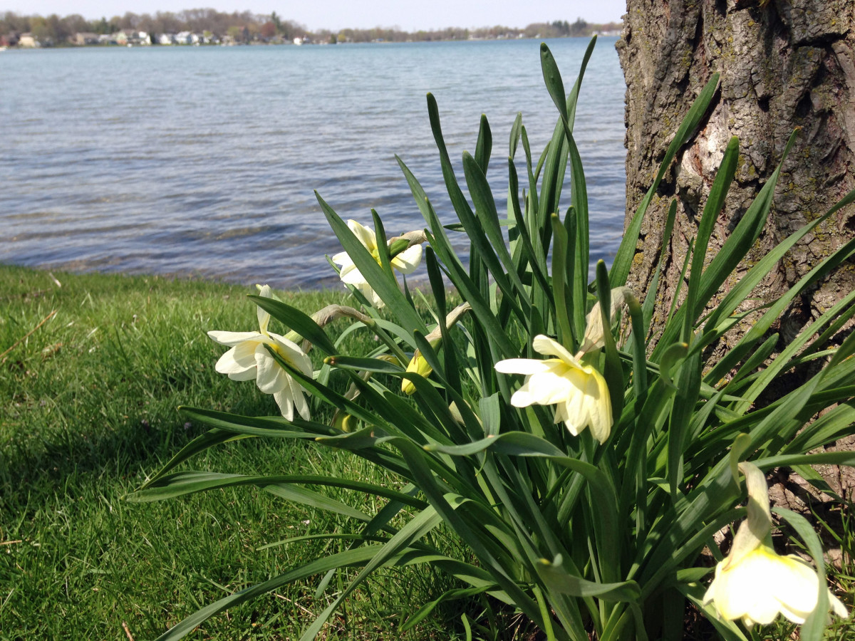 flowers and lake ps 2015 05-03-15