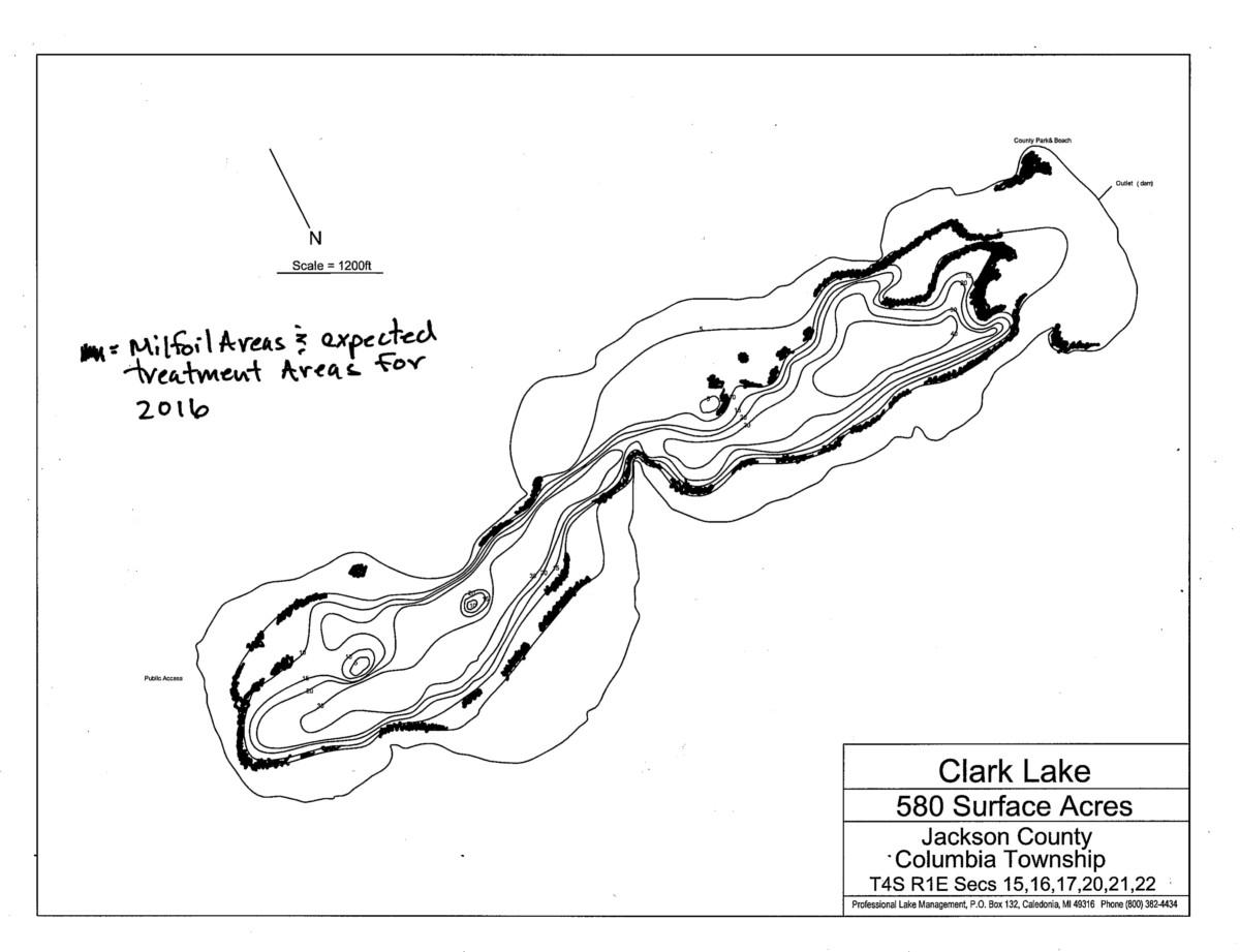 Clark Lake Milfoil