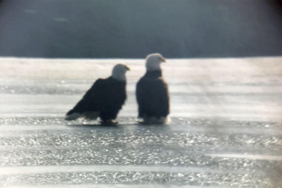 Eagles PS 3