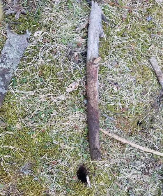 AS 2017 03-09 stick 2