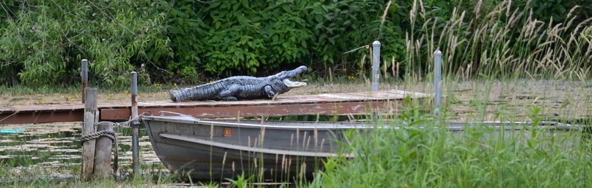 alligator ps